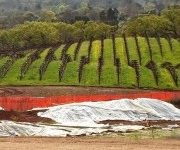 Rows of Wine Grapes on a Hill