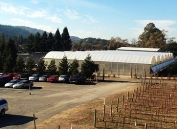 Parking lot and vineyard of NovaVine Wholesale Plant Nursery