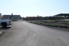 Devil Mountain Wholesale Nursery Completed Parking Area