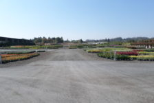 Devil Mountain Wholesale Nursery Grounds After Construction