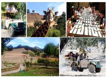 Collage of Corporate Trip to Safari West