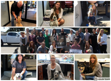 Collage of photos from the 2018 bring your dog to work day fundraiser, pictured is the staff group picture as well as individual pictures of staff members and their dogs