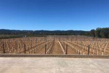 Aperture Cellars - Beginnings of a Vineyard