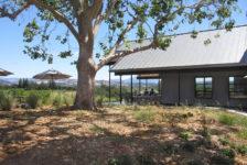 Oak Tree next to MacRostie Tasting Room