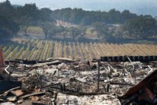 Paradise Ridge Winery Fire Aftermath